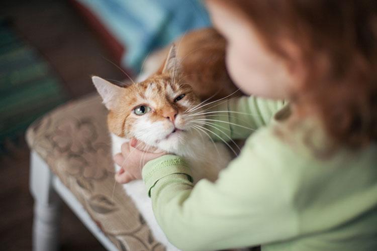 девочка играется с котом