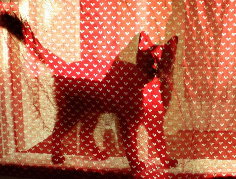 фото игры найди кота