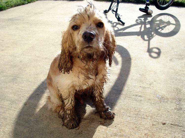 грязная собака