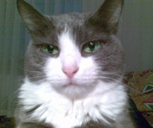 Кошка-долгожительница Дымка
