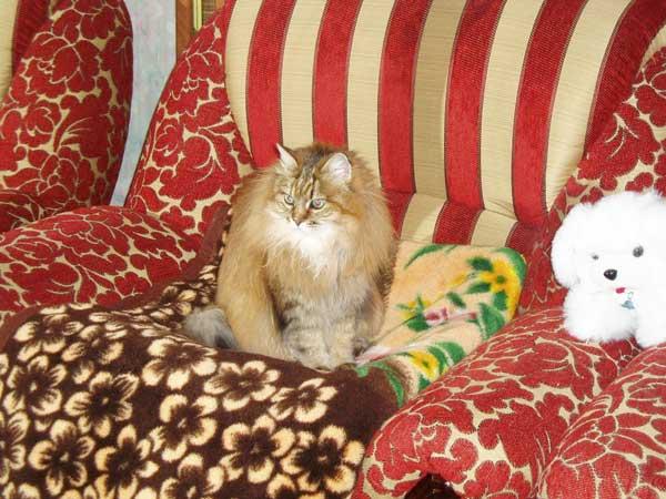 Кошка-долгожительница Капитолина