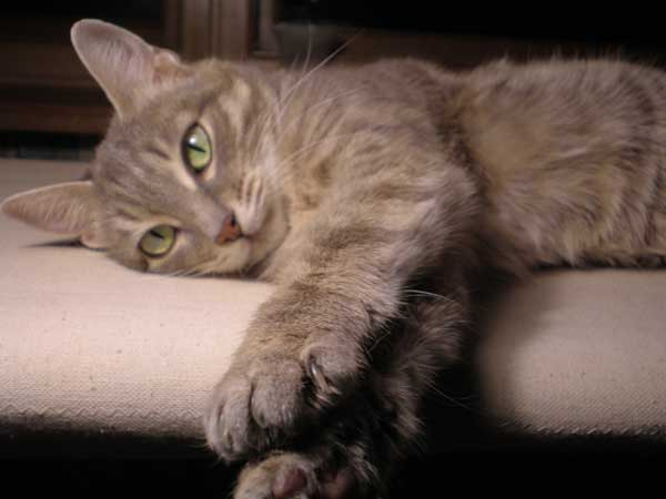 Кошка-долгожительница Марта