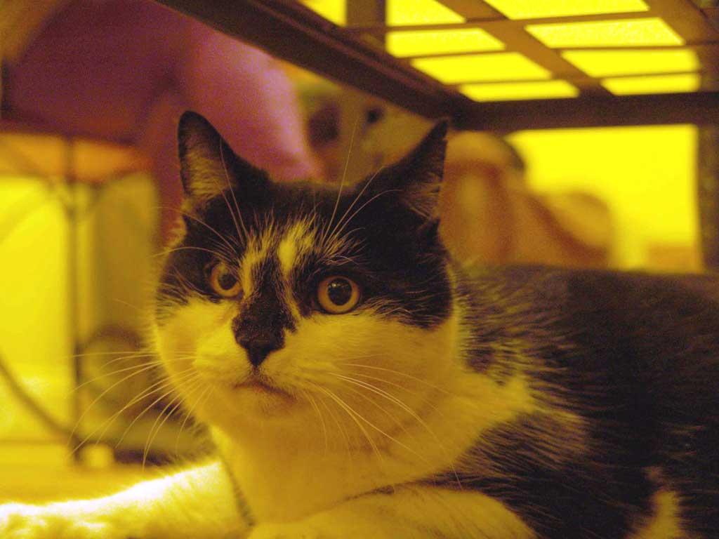 Кошка-долгожительница Матильда