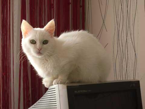 Кошка-долгожительница Муся