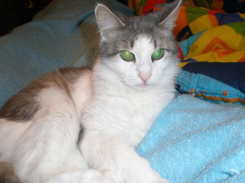 Кошка-долгожительница 21 год