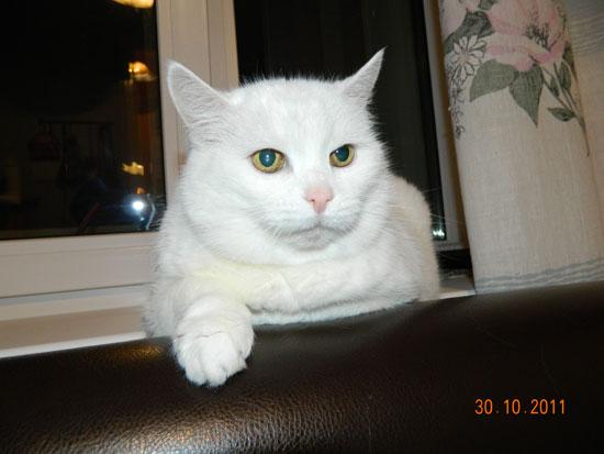 Кошка-долгожительница 19,5 лет