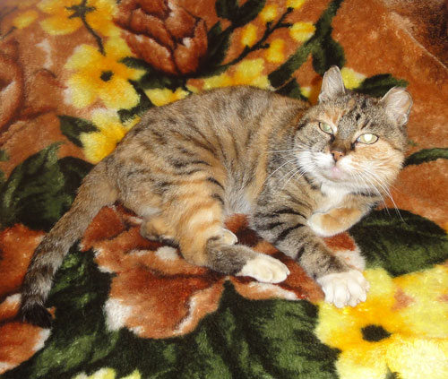 Кошка-долгожительница 23 года