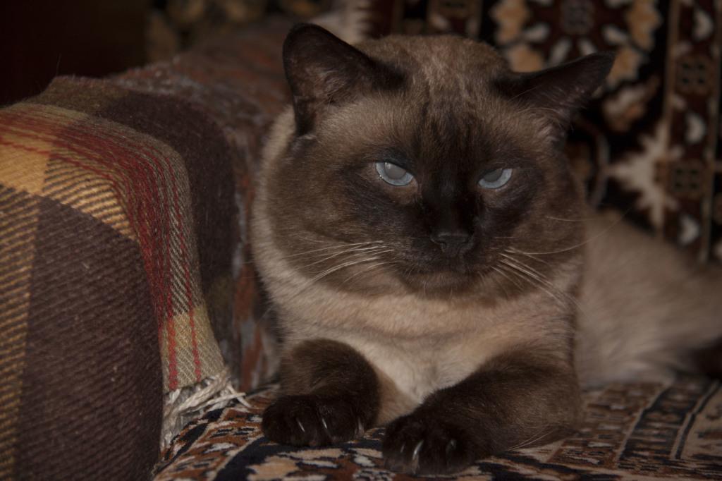 Кот-долгожитель 20 лет