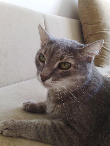 Кот-долгожитель 16 лет