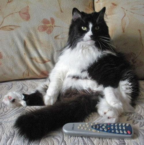 Кот-долгожитель Кузьма
