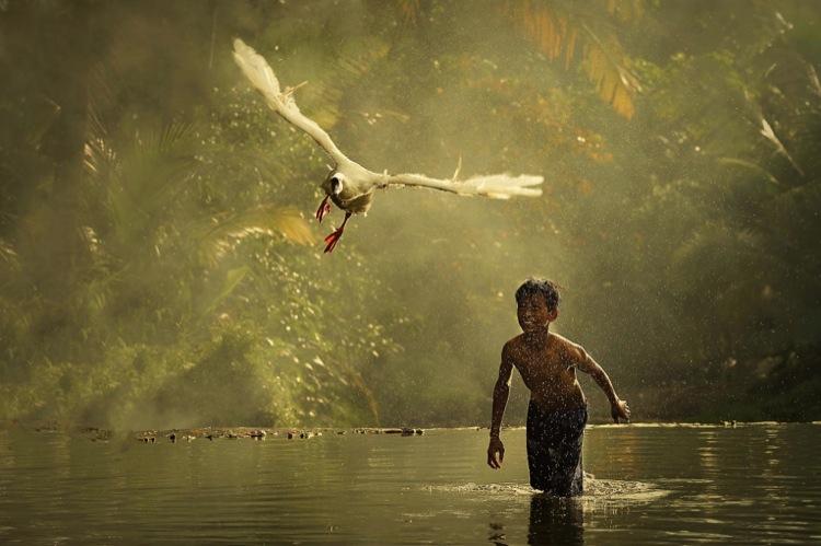 мальчик гоняется за птицей