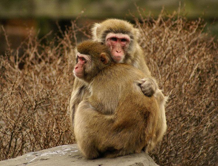 маленькая обезьяна