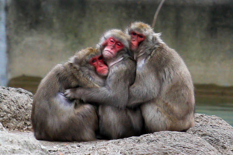обезьяны маленькие