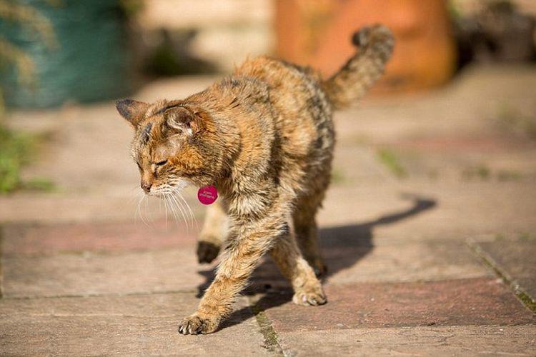 Самая старая кошка Поппи