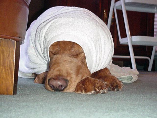 собака после купания
