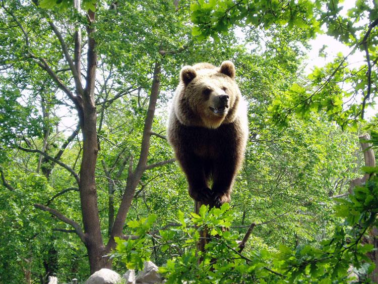 Стокгольм Скансен зоопарк медведь