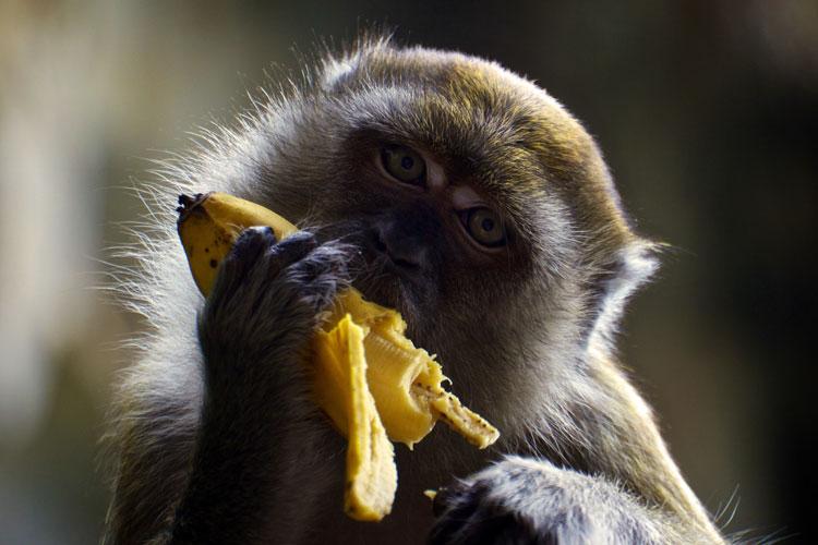 ест банан