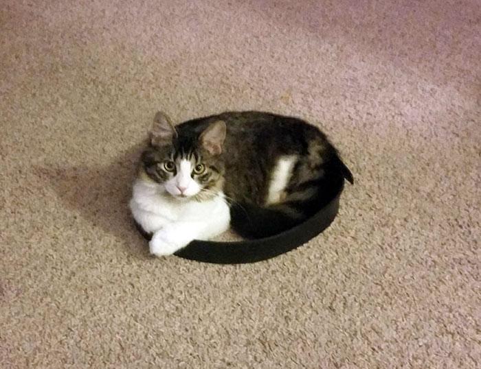 фото кот лежит