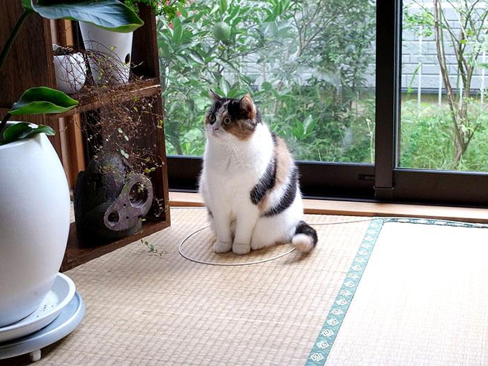 фото коты приколы