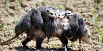 фото семейное счастье