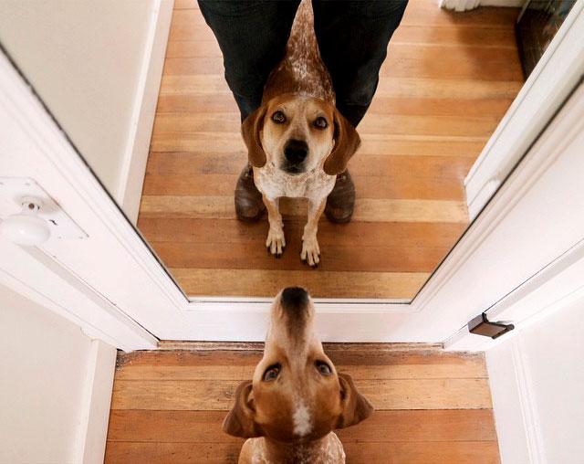 фото собаки модели