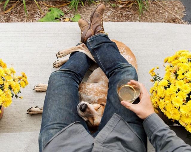 фотограф собак
