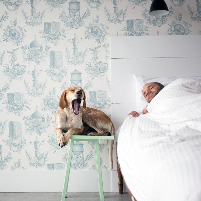 фотографии больших собак