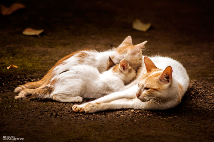картинки котят и кошек