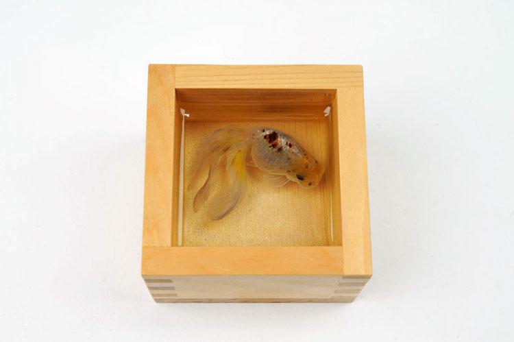 картинки рыб