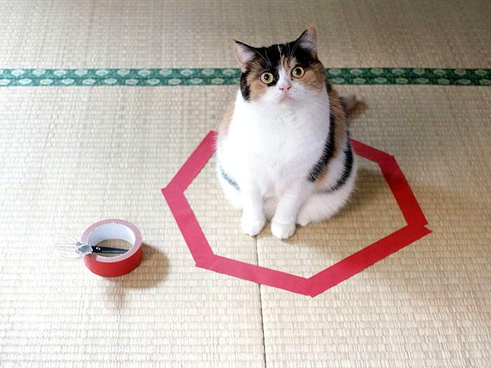 кот в круге