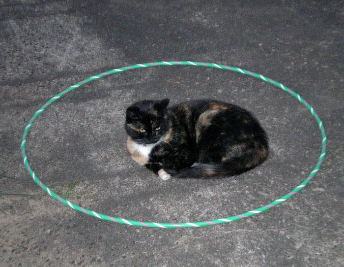 кот ждёт