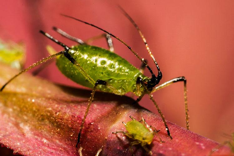 красивые насекомые