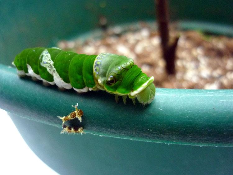 маленькие гусеницы