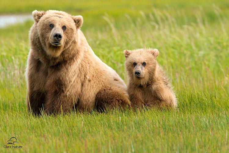 медведь и детёныш