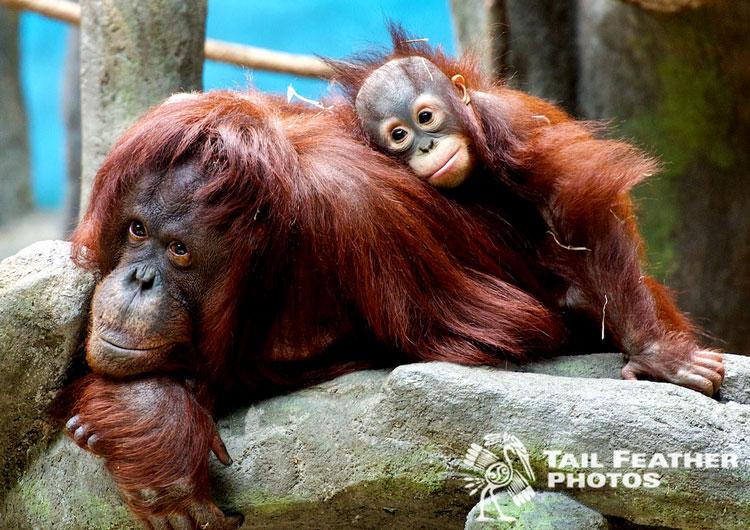 обезьяна детёныш