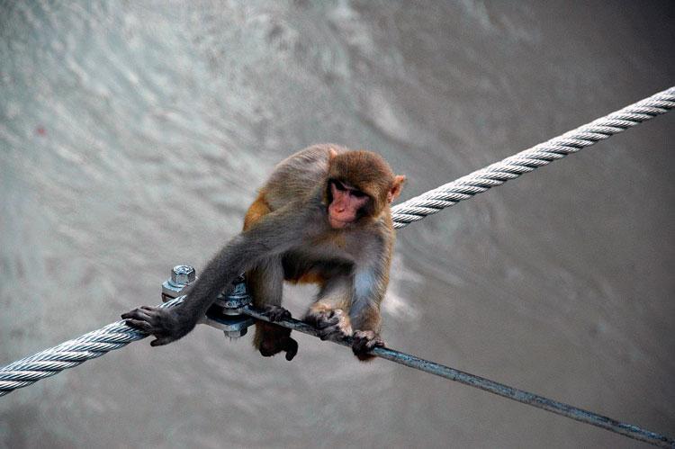 обезьяны фото