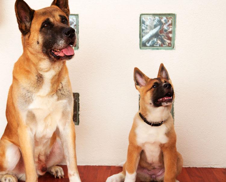 пёс и щенок