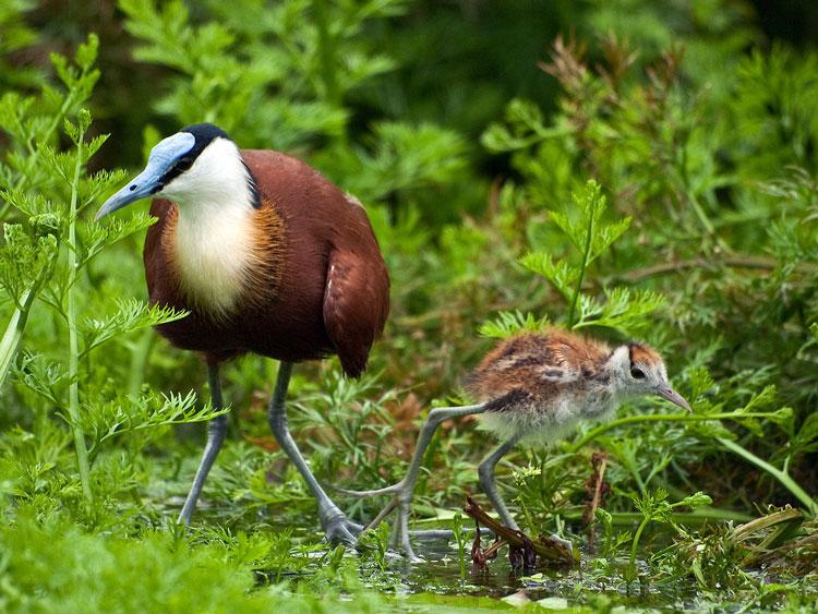 птица и птенчик