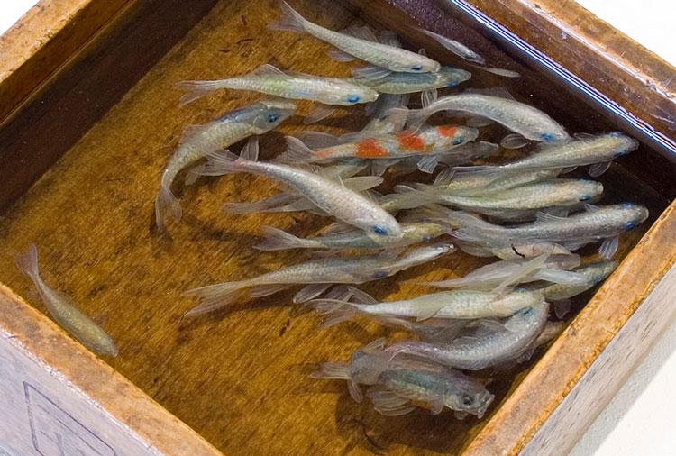 рыбы фото