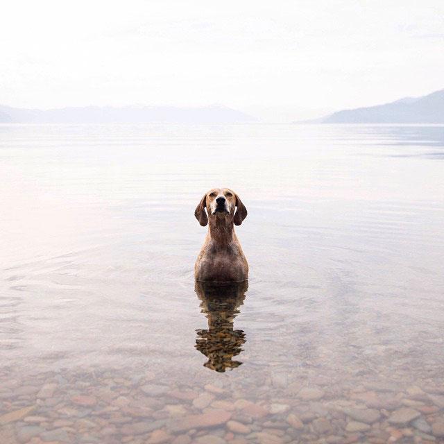 собака фотограф