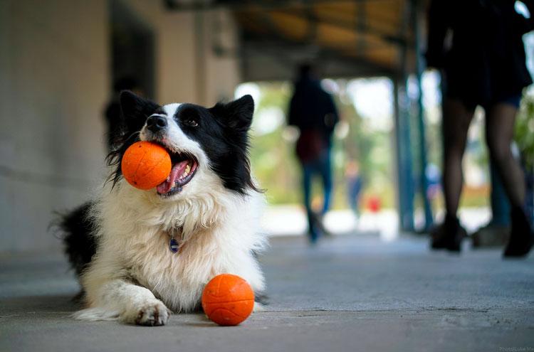 собака мяч