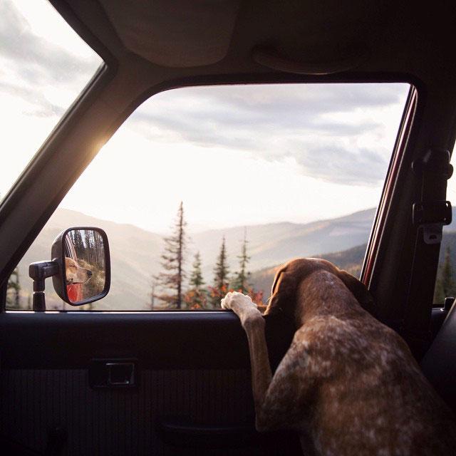 собака путешествует