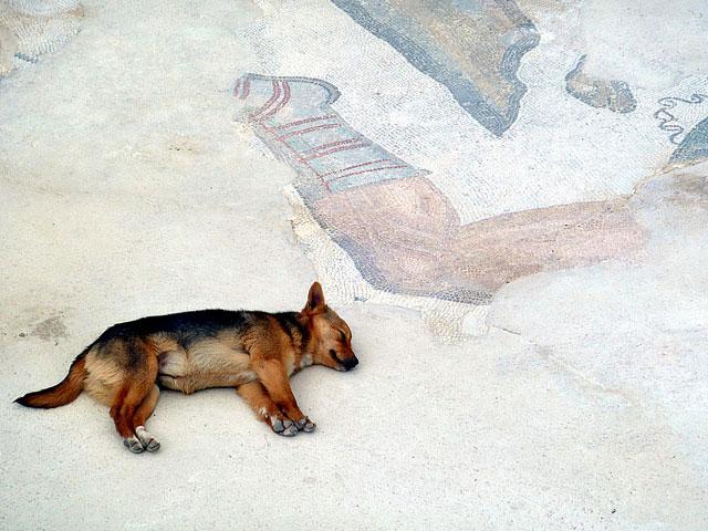 собака в музее