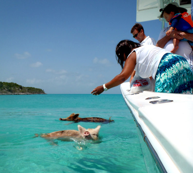 багамы свиньи