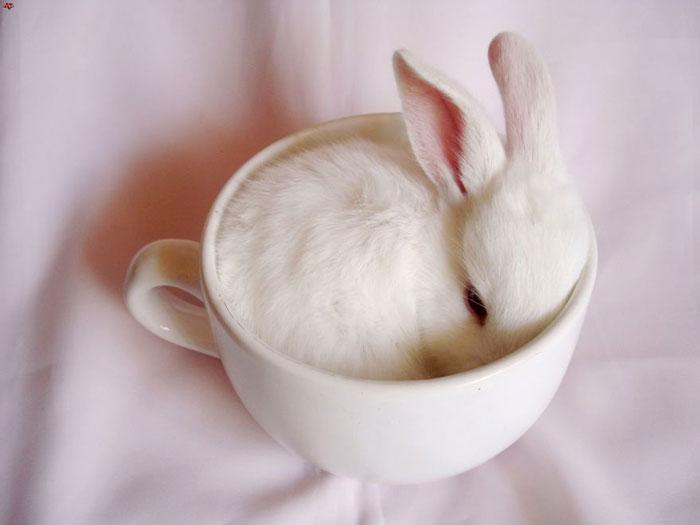 белый кролик фото