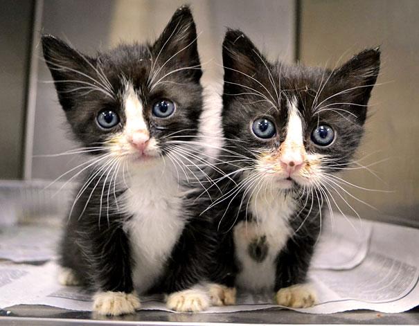 два маленьких котёнка