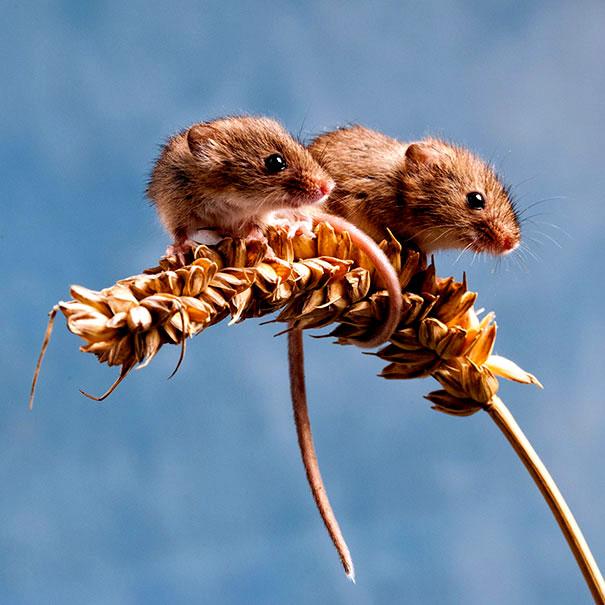 два мышонка