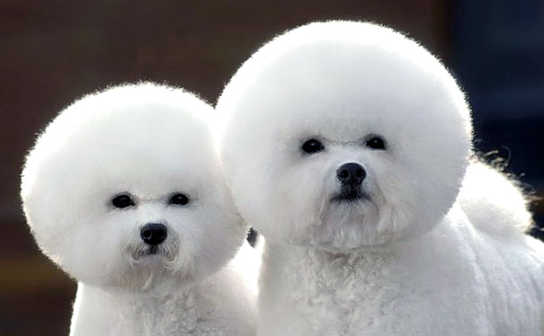 две собаки фото
