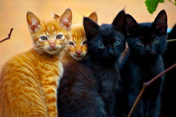 фотки котят