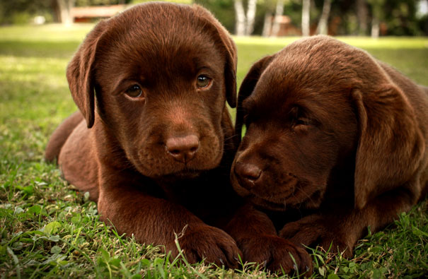 фото маленького щенка